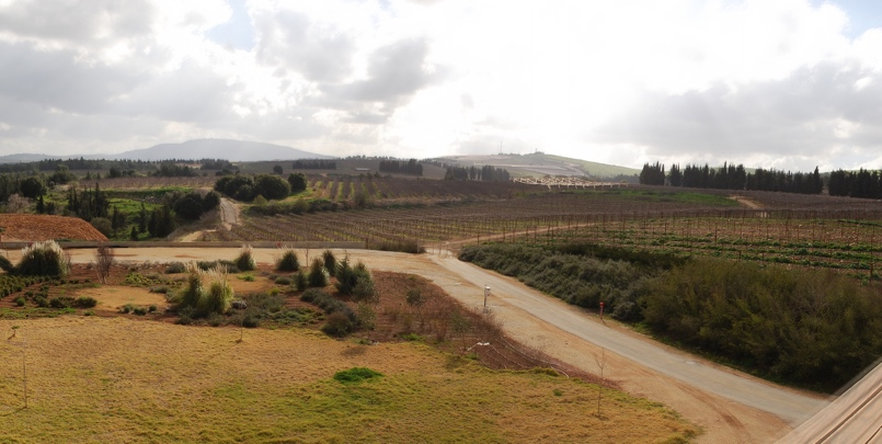 Israel's Wine Trail