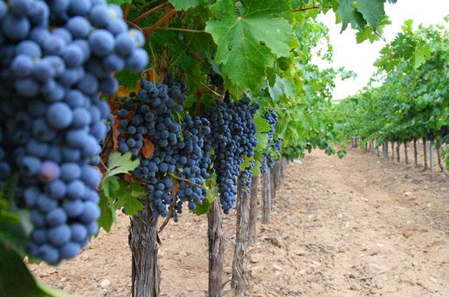 The Vivanco Experience In La Rioja, Spain